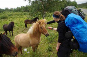 Zu sehen sind zwei Wanderer, die an einer Weide mit Pferden stehen und eins der Pferde streicheln.