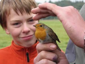 Zu sehen ist eine Hand die ein Rotkehlchen festhält. Im Hintergrund bestaunt ein Junge den Vogel.