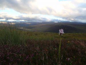 Zu sehen ist eine einzelne violette Blume vor dem Hintergrund der schottischen Berglandschaft mit aufgewühltem Wolkenhimmel.