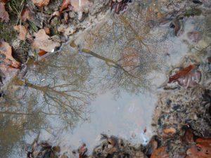 Bäumer spiegeln sich in einer Fütze
