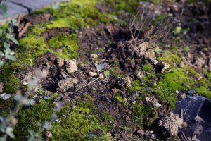 moosbedeckter Boden am Straßenrand